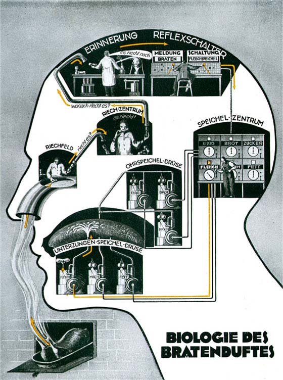 pictorial representation of the sensory processes occurring in a man's head