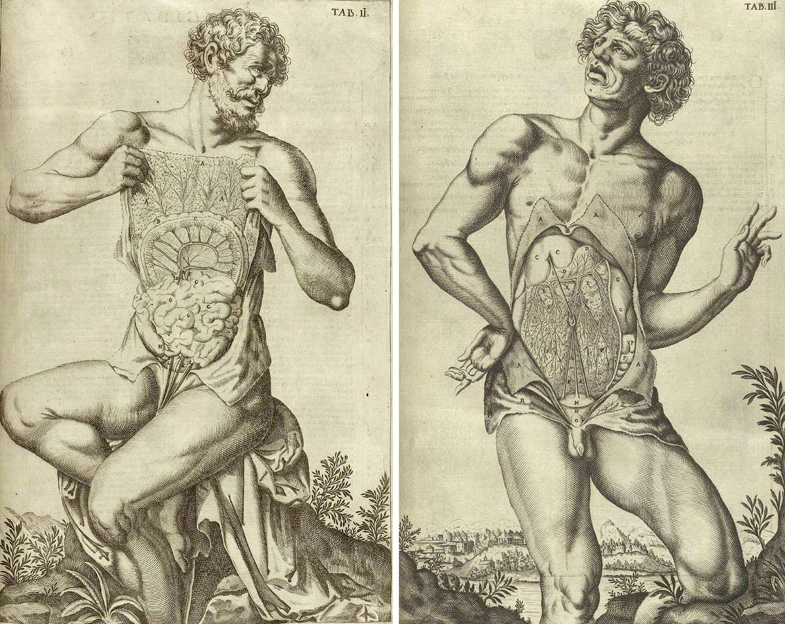 historical anatomy drawings