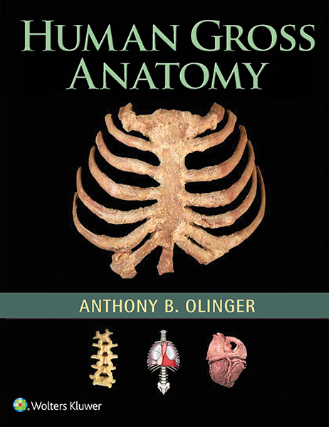 Human Gross Anatomy book cover