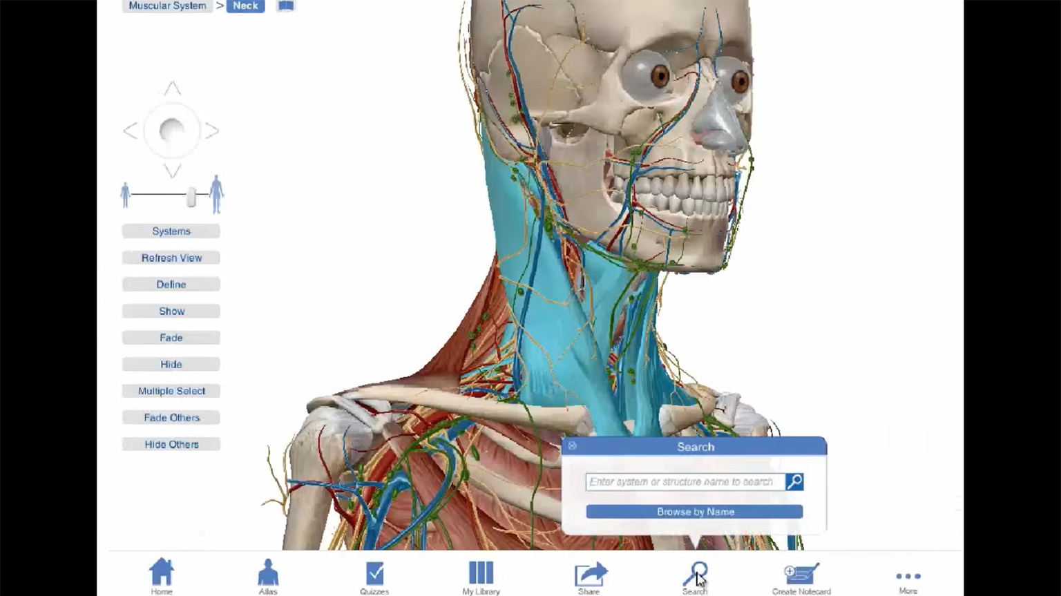 Screenshot of Visible Body Anatomy Education Solutions on Ovid video