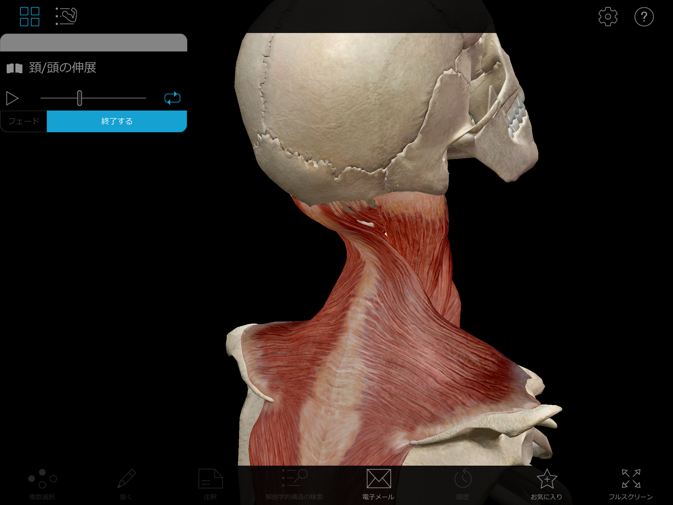 Thumbnail of Visible Body Muscle Premium 3D model animation