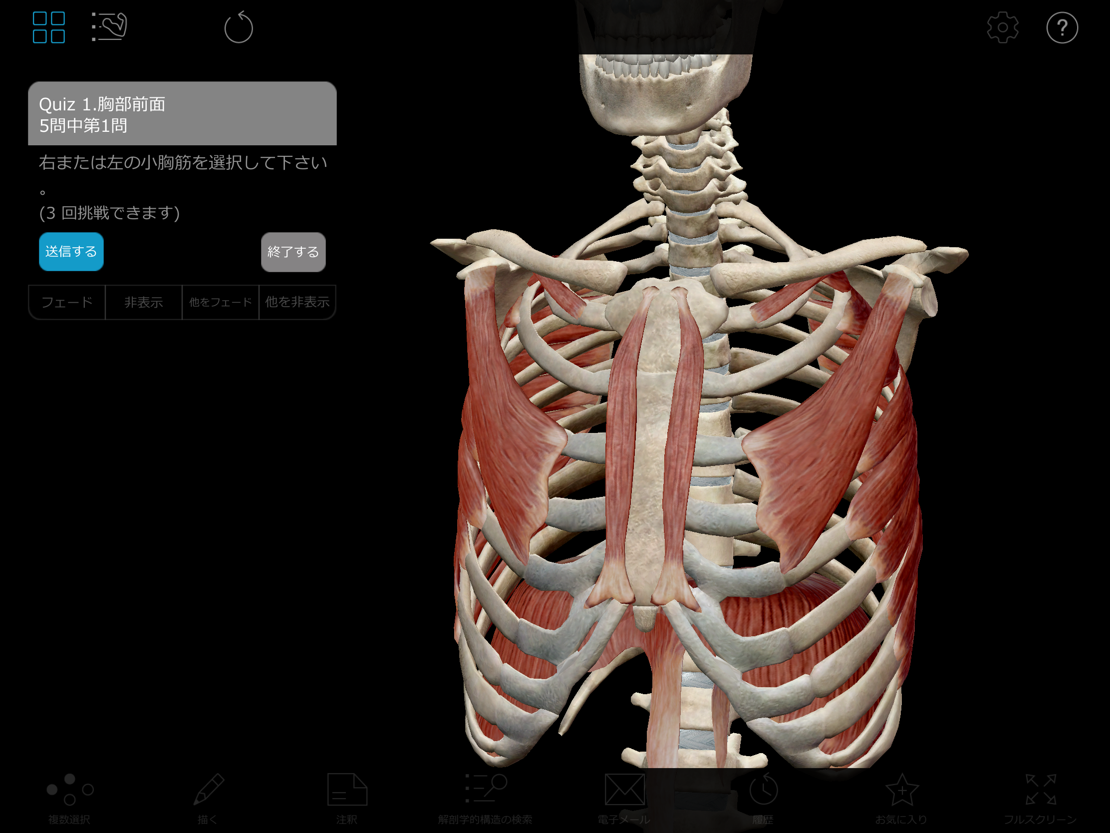 Thumbnail of Visible Body Muscle Premium 3D model quiz